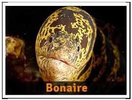 package-Bonaire