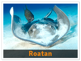 package-Roatan