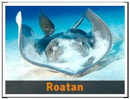 package-Roatan
