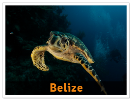 package-belize