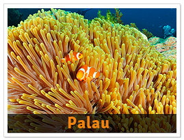 package-palau