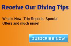 divingtips
