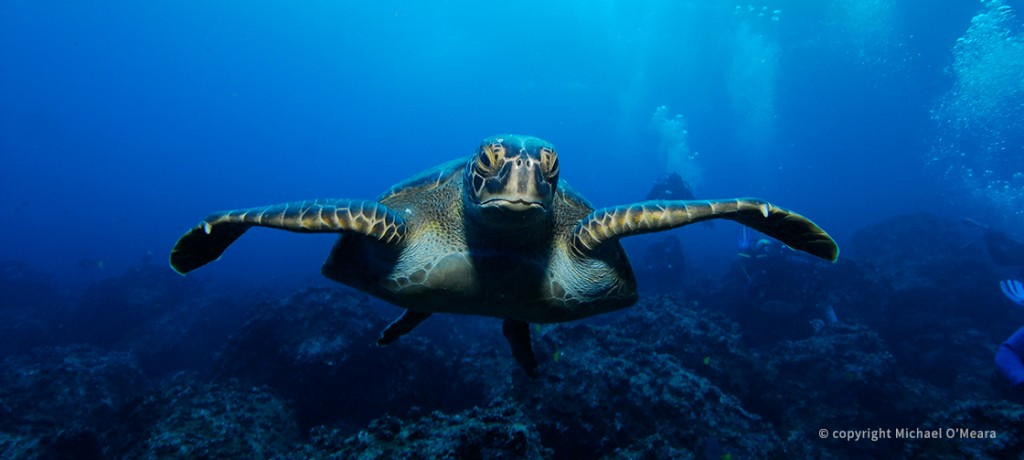 HomepageSlides_3_Turtle
