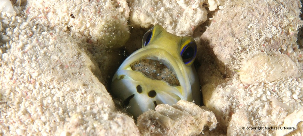 HomepageSlides_4_JawFish